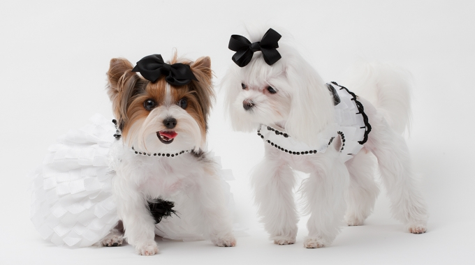 Yvette Ruta Pet Couture featured in Celebrity Catwalk Charity Event