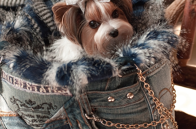 Luxury Pet Couture by Yvette Ruta
