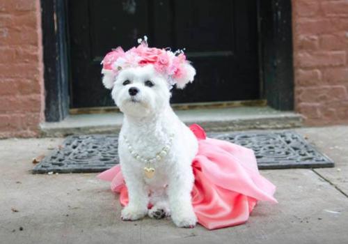 Bella Mia in Yvette Ruta Bridal