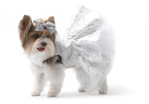 Paisley: White Dress