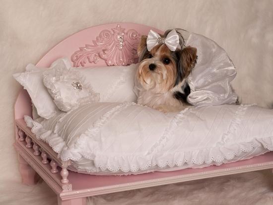 Rachel Pet Daybed