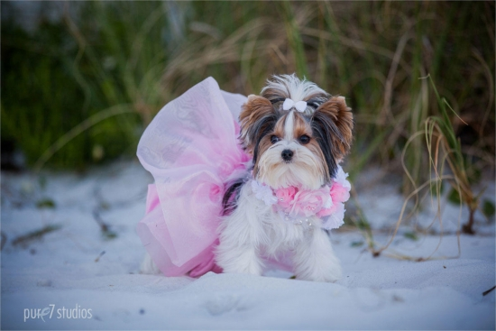 Rachael Bridal Set