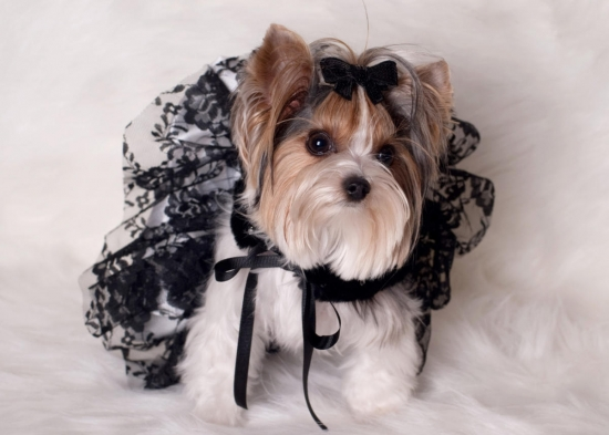 Black and White Lace Tutu