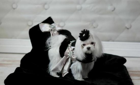 Black Lux Mink Blanket