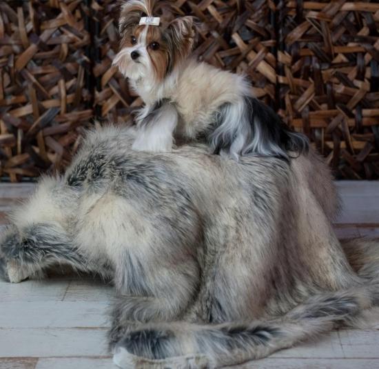 Fiona Fur Blanket