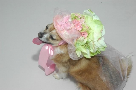 Here Comes the Brides Maid