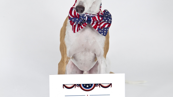 Yvette Ruta and America Top Dog Model 2016 Contest